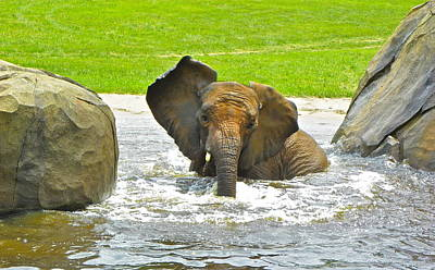Photograph - Elephant Bath by Eve Spring