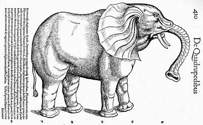 Historia Wall Art - Photograph - Elephant, C1570 by Granger