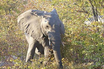 Wall Art - Photograph - Elephant Charging by Judith Hochroth