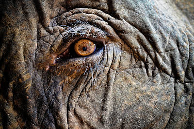 Sensory Perception Photograph - Elephant Eye by Photo by Volanthevist