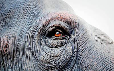 Part Of Photograph - Elephant Eye by Selvin