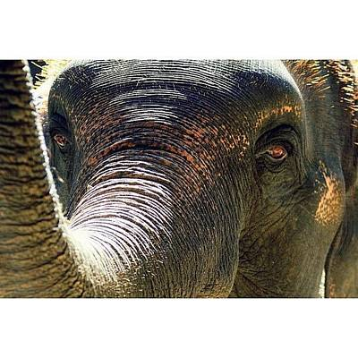 Natural Photograph - Elephant Eye..#travel #thailand by A Rey