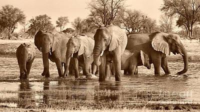 Photograph - Elephant Family At Khwai by Mareko Marciniak