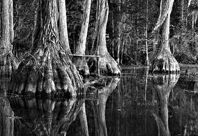 Art Print featuring the photograph Elephant Feet by Dan Wells