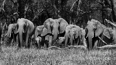 Photograph - Elephant Herd by Mareko Marciniak
