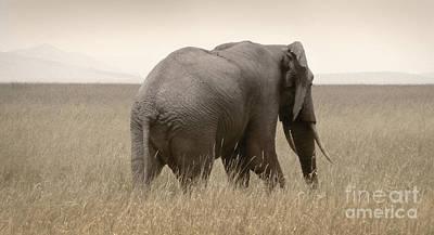 Photograph - Elephant On The Plains by Tina Broccoli