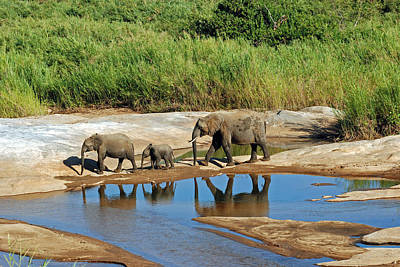 Elephant Reflections And The Sand River Art Print