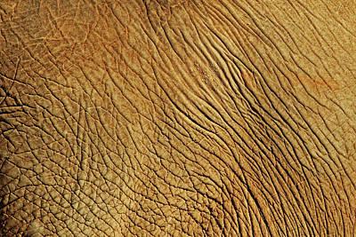 Elephant Skin Art Print by Daniela Duncan