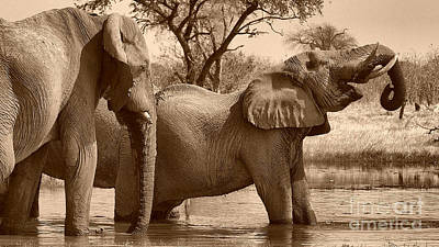 Photograph - Elephants At Khwai by Mareko Marciniak