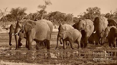 Photograph - Elephants Crossing Khwai River by Mareko Marciniak