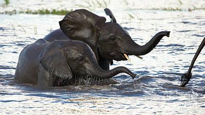 Photograph - Elephants Crossing The River by Mareko Marciniak