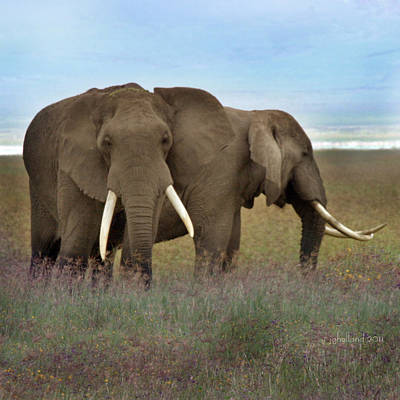 Photograph - Elephants Of The Crater by Joseph G Holland