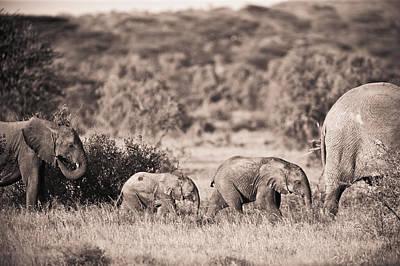 Elephants Walking In A Row Samburu Kenya Art Print