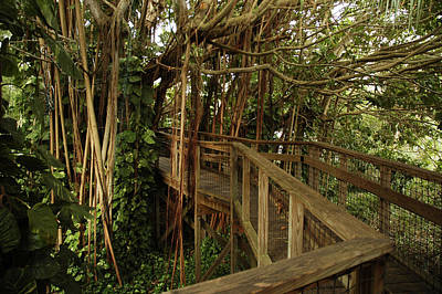 Photograph - Elevated Path Going Through Banyan Tree by Carol Vanselow