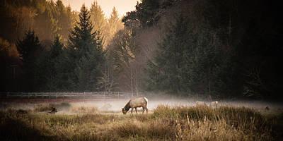 Elk Camp Art Print by Randy Wood
