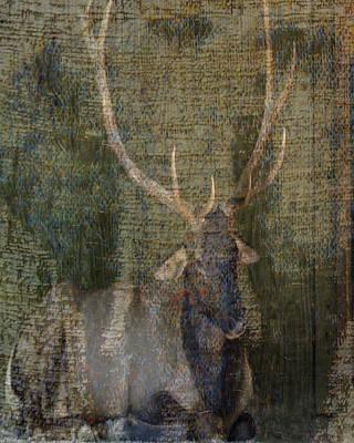 Photograph - Elk by Patricia Januszkiewicz