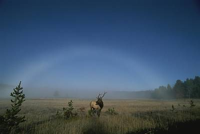 Natural Forces Photograph - Elk With Fog Bow In Sky by Norbert Rosing