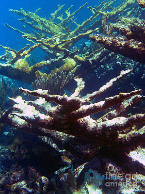 Photograph - Elkhorn Coral- Old And New by Li Newton