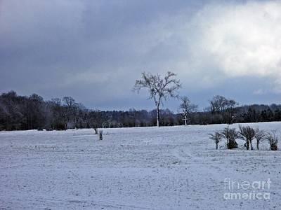 Elm In A Winter Field Original