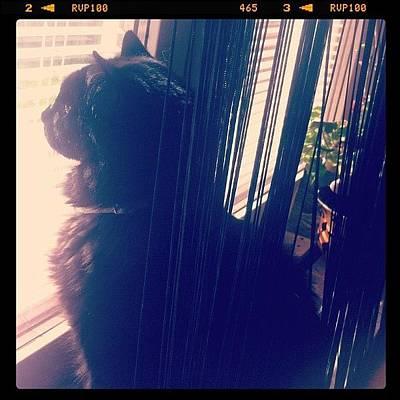 Elvis Photograph - #elvis #black #cat #window #flower by Martina Bergstrom