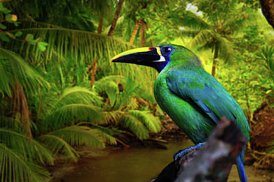 Photograph - Emerald And Blue Toucan  by Harry Spitz
