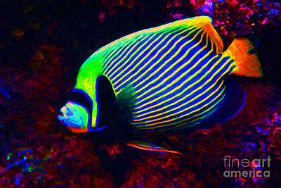 Angel Fish Photograph - Emperor Angelfish by Wingsdomain Art and Photography