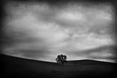 Oak Photograph - Emptiness by Laurie Search