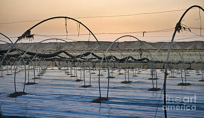 Empty Greenhouse In The Desert Art Print by Noam Armonn