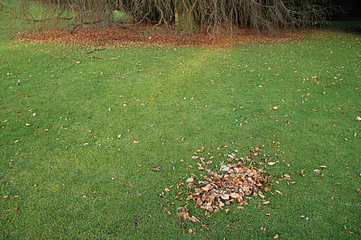 Photograph - Empty Lawn With A Little Heap Of Leaves Scraped Together by Matthias Hauser