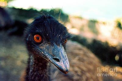Emu - Emu Looks Original