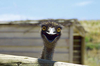 Emu - Emu Panoramic Original by Luke Kneale