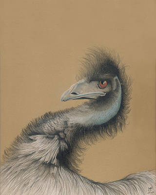Emu Drawing - Emu by Ann Hamilton