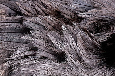 Emu Feathers Art Print