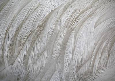 Emu Feathers Art Print by Paulette Thomas