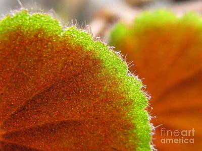 Begonia Photograph - Emulate by Tina Marie