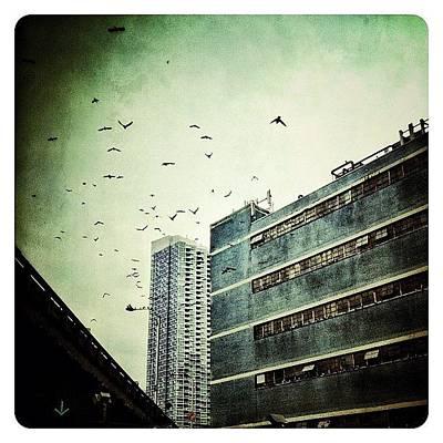 Birds Wall Art - Photograph - En Route by Natasha Marco