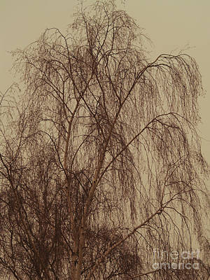 Photograph - En Willow I Danmark by Michael Canning