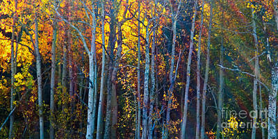 Enchanted Aspen Art Print