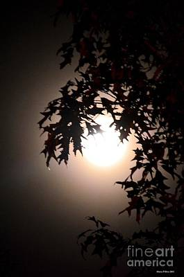 Photograph - Enchanted By Moonlight by Maria Urso