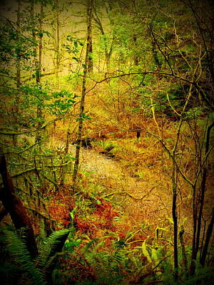 Photograph - Enchanted Stream by Cindy Wright