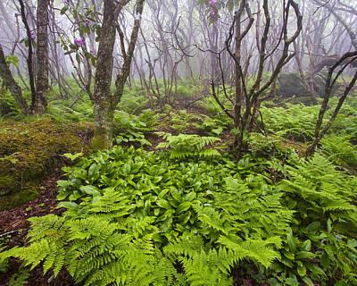 Enchanted Woodland Forest In Fog Blue Ridge Parkway In North Carolina Art Print