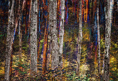 Photograph - Enchanted Woodland by Fred LeBlanc