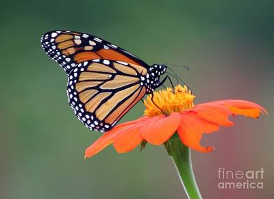 Photograph - End Of The Summer Beauty by Living Color Photography Lorraine Lynch