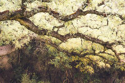 Photograph - Engelmann Oak Branches by Alexander Kunz