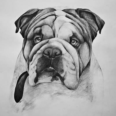Drawing - English Bulldog by Asta Viggosdottir