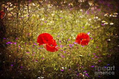 English Summer Meadow. Art Print
