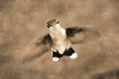 Photograph - Enigma On Wings by Bill Pevlor