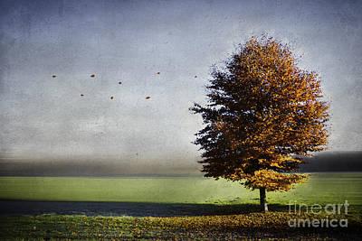 Enjoying The Autumn Sun Art Print by Hannes Cmarits