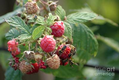 Photograph - Enjoying The Fruits Of Summer by Living Color Photography Lorraine Lynch