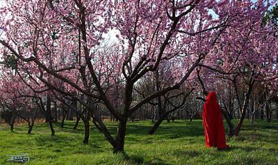 Photograph - Enter Spring by Alana  Schmitt
